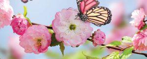 The Variety Shop - Blog - Spring